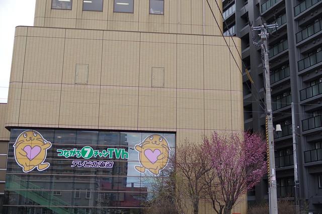 東北地区桜5