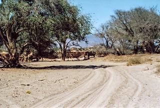 Elefantenherde im Aba-Huab Gebiet, Damarland