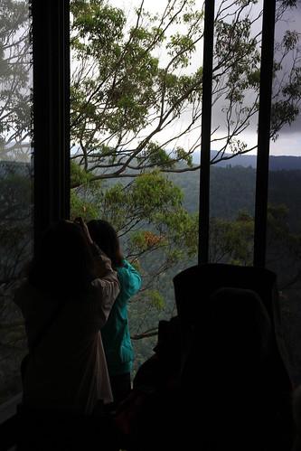 澳洲昆士蘭-Binna Burra Sky Lodges餐廳看無尾熊-20141120-賴鵬智攝