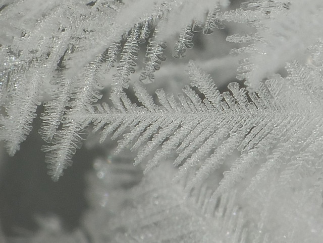 Micro-Miniature Frost Crystal Patterns resemble Snowflake or Fern Plant Structures Super Macro DSCF8507