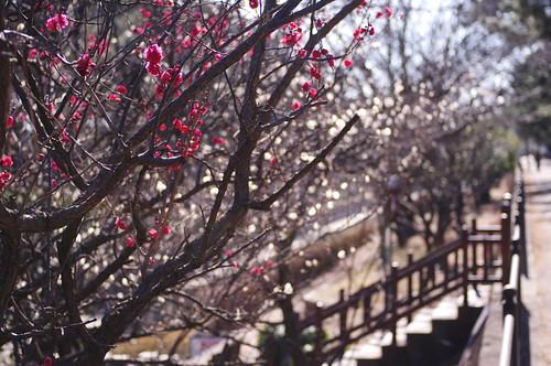 walk early spring