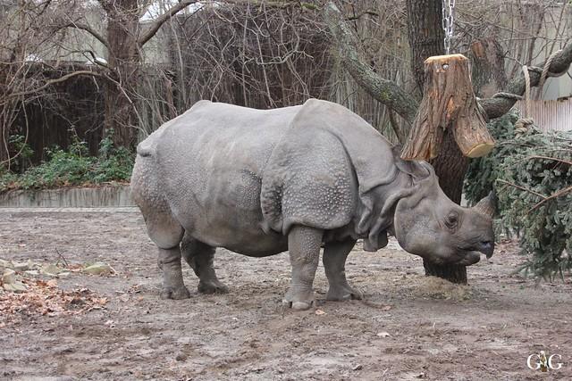 Zoo Berlin 31.01.201616
