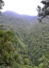 TORO AMARILLO, COSTA RICA - NP Juan Castro Blanco/ ТОРО-АМАРИЙО, КОСТА-РИКА - Н.П. Хуан Кастро Бланко