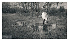 At the Small Puddle