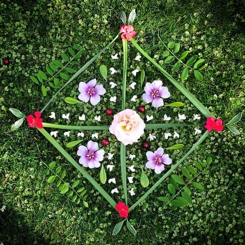 Garden Mandala No. 41 #spring #gardening #flowers #mandala #flowerstagram #landart #gardenartflowers #gardenart #geranium #mallow #plum #locust #azalea #cross #square #quadrants
