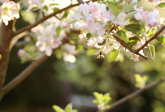 Spring06W