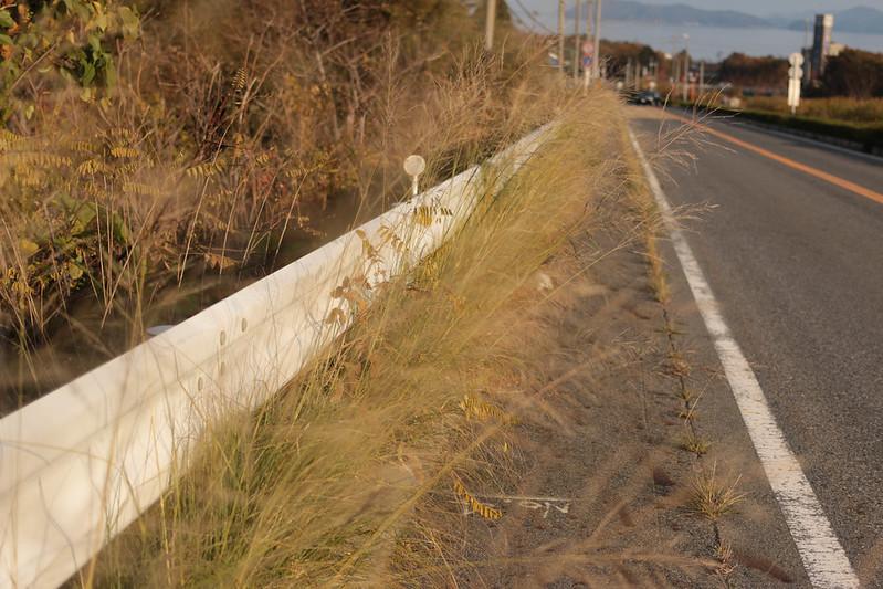 20141122-武奈ヶ岳&京都ライトアップ-0500.jpg