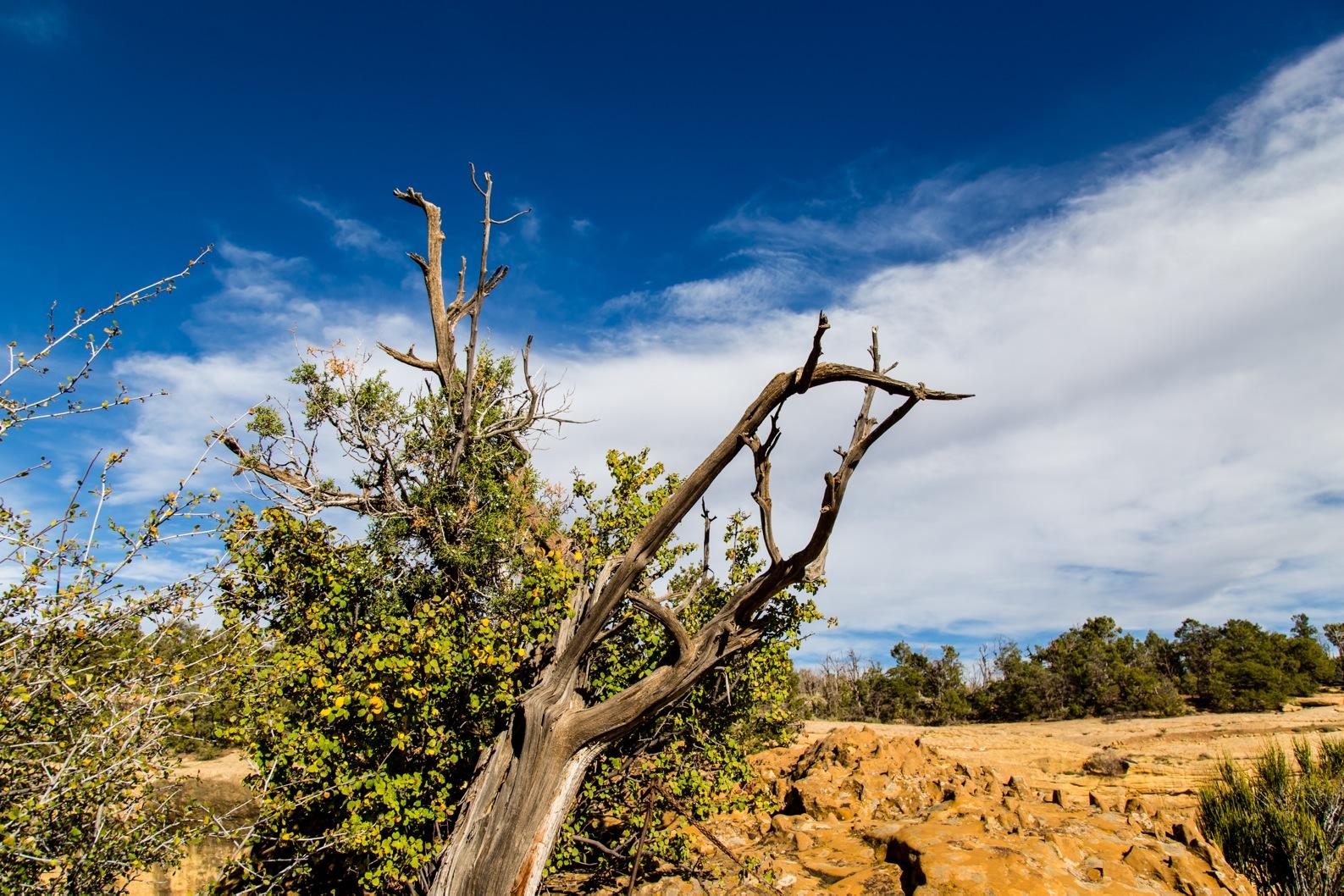 Mesa Verde-7187