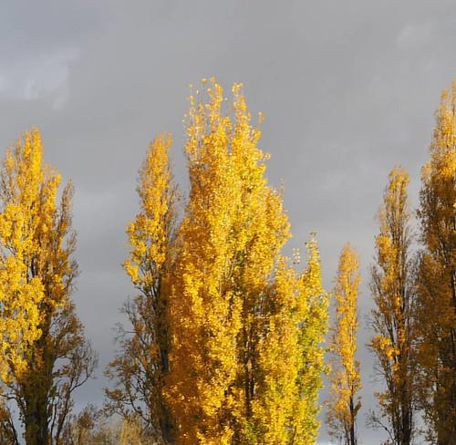 #yellow #Autumn