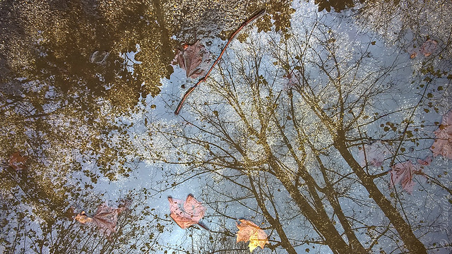 Harmony of reflections