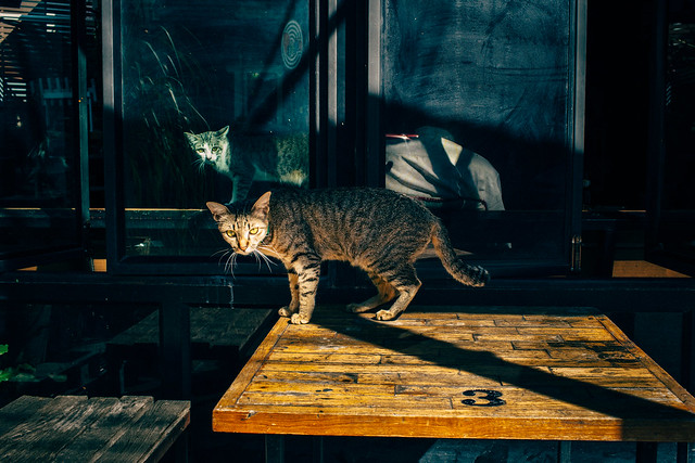 40 Fierce Photos Featuring Felines - Cat Street Photography - untitled