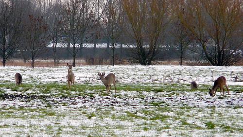 Winter Groothusen Jan. 2016