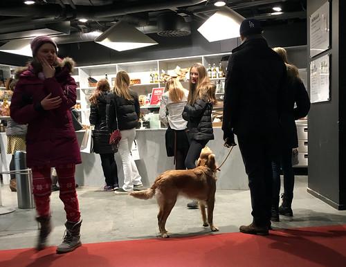 sverigexmas-dogstockholmIMG_2406