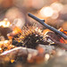 Beech Mast Bokeh by Nick Cowling