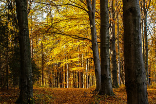 Herbstwald - autumn forest