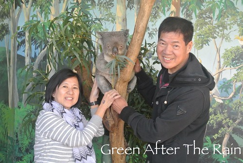 150911g Phillip Island Maru Koala and Animal Park _010