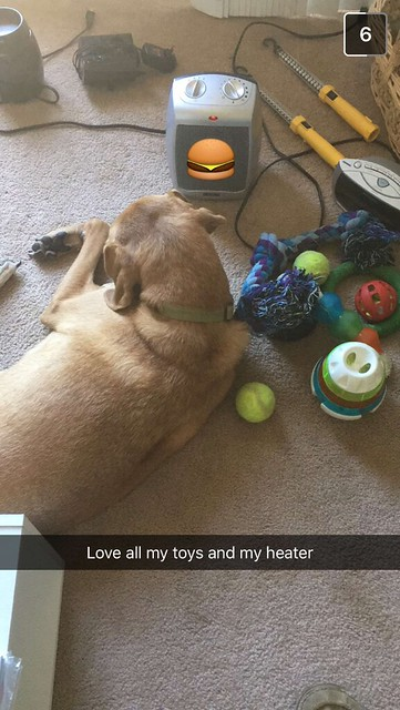 Murphy and his toys