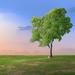 Beneath A Tree by E.M.Thomas