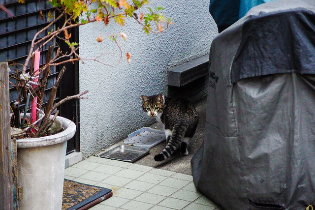 Today's Cat@2016-02-24