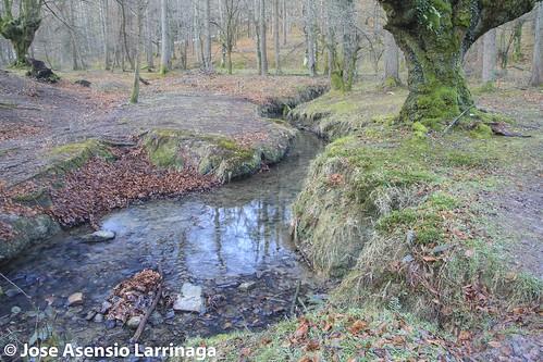 Parque Natural de Gorbeia  #DePaseoConLarri #Flickr -3062