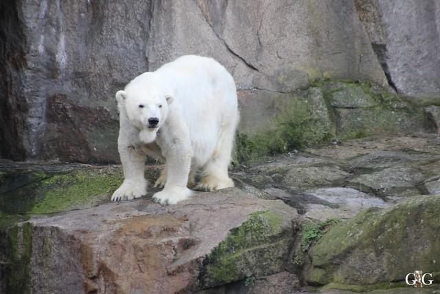 Zoo Berlin 31.01.20162