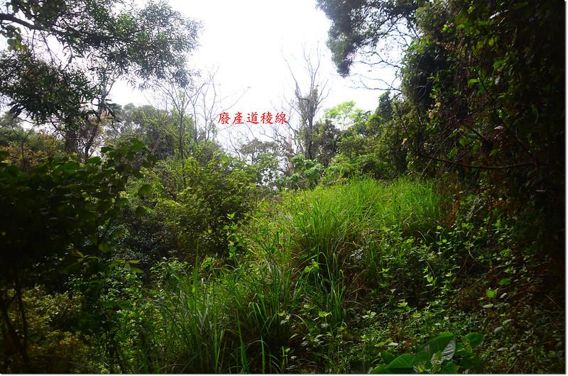 龍母拜山南峰登山路徑 3