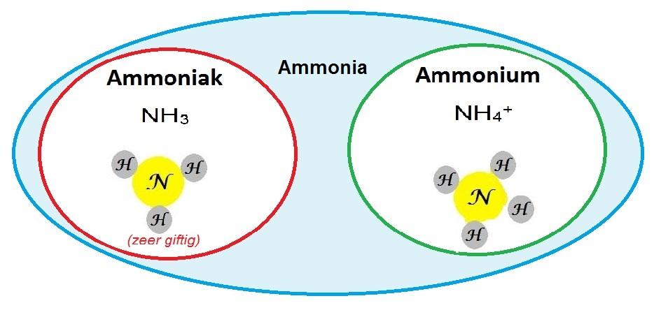 Ammoniak ammonium ammonia