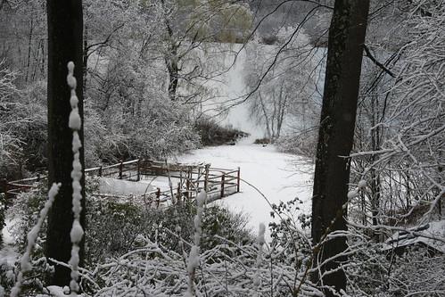 garden view IMG_5414
