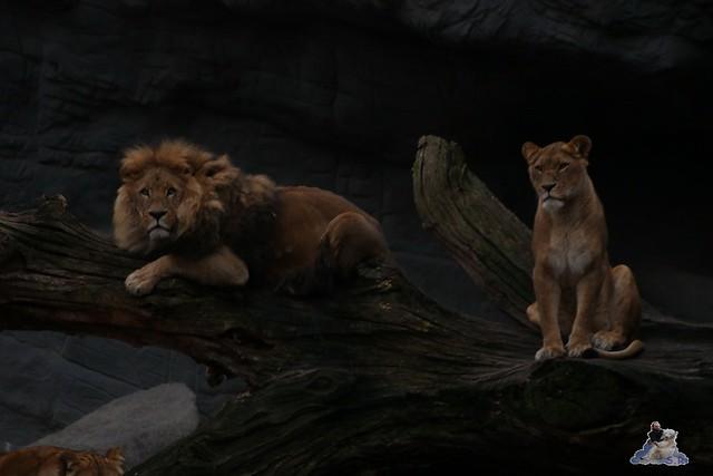 Tierpark Hagenbeck 02.01.2015   33