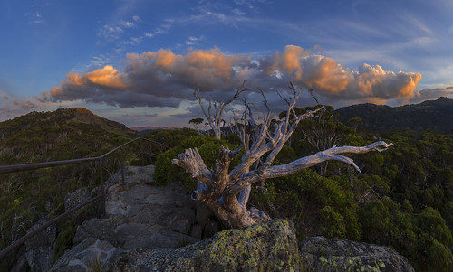 sunset tree clouds dead deadtree snowgum charlottepass