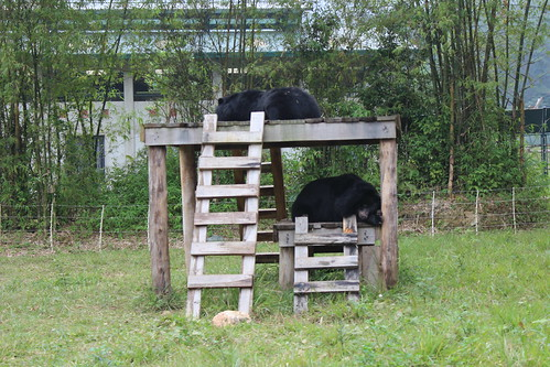 Bears relax on the platform