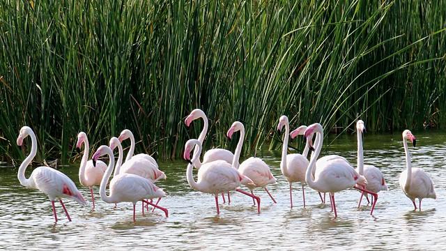 Marievale Bird Sanctuary