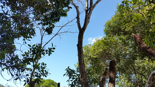 sky tree verde sunny cielo panama soleado santiagoveraguas