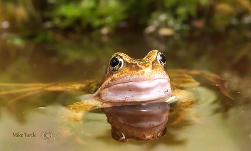 water wales frog