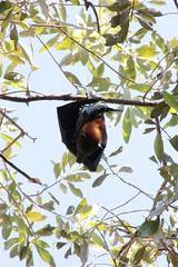 bats Timber Creek 3