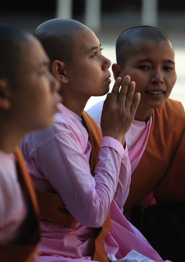 Buddhist Nuns Pray At The Shwedagon, Burma