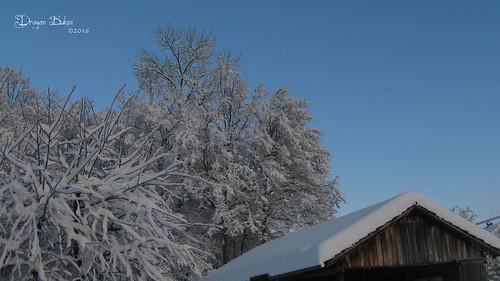 winter snow landscape snowy idyll