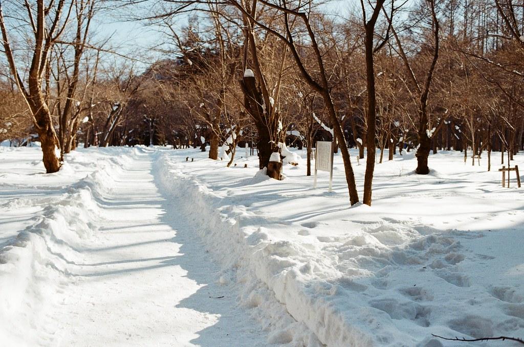 北海道神宮 Japan / Kodak ColorPlus / Nikon FM2 2016/02/01 北海道神宮,第一次來這裡,看到樹和雪的景,很美。  在來北海道之前,我都以為下雪的地方是看不到太陽的,但我好像白癡,太陽都一直存在著!  Nikon FM2 Nikon AI AF Nikkor 35mm F/2D Kodak ColorPlus ISO200 8265-0010 Photo by Toomore