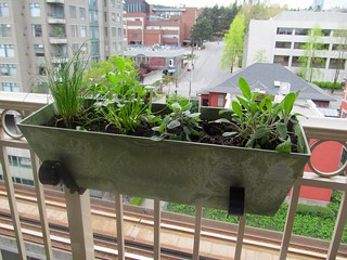 My new herb garden