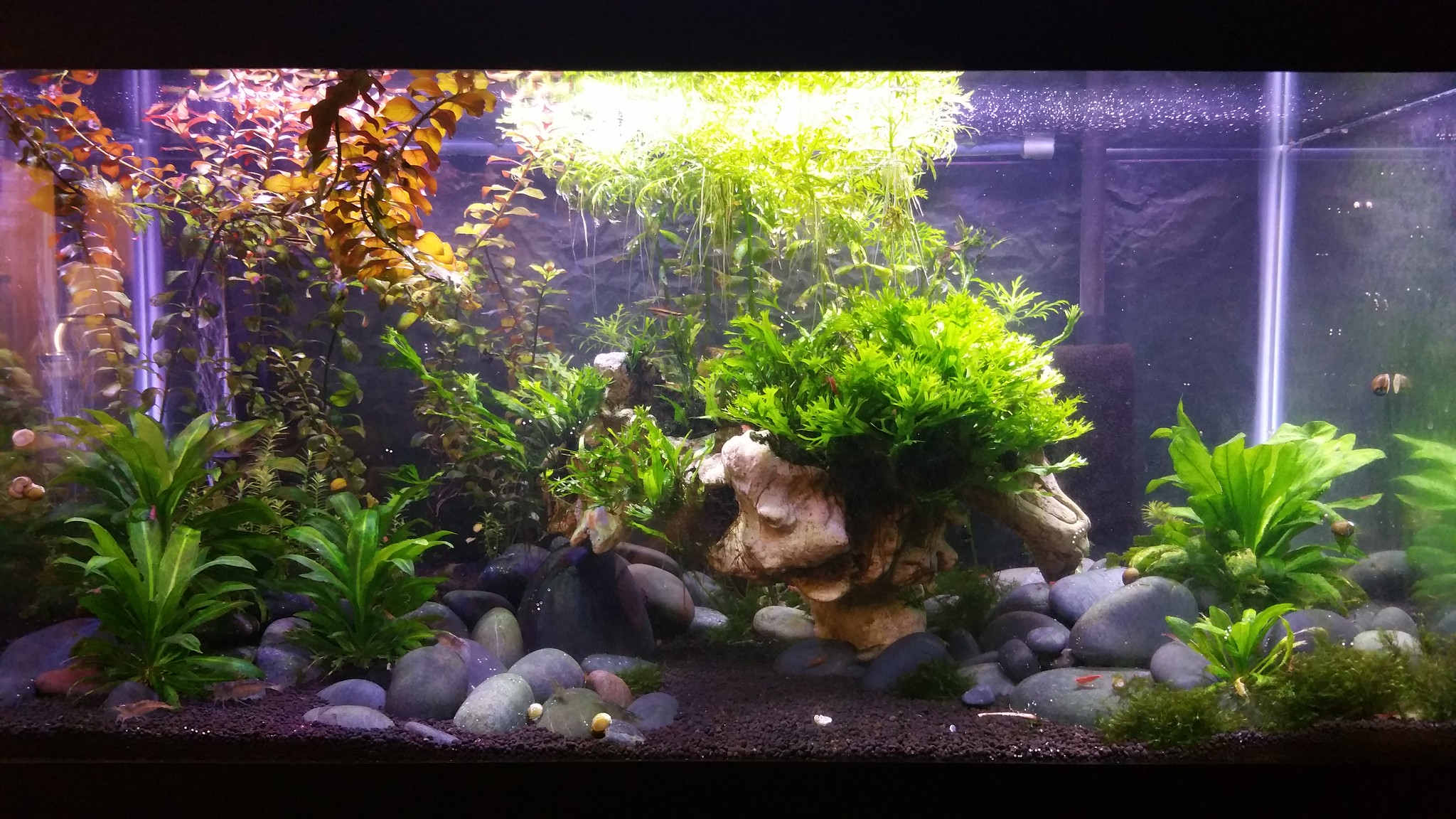 How to set up a low tech planted aquarium aquariadise for Plante aquarium