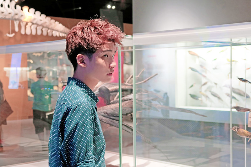 typicalben viewing at Lee Kong Chian Natural History Museum
