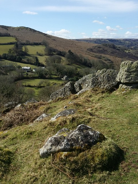 Nattadon Common, with Meldon Hill background