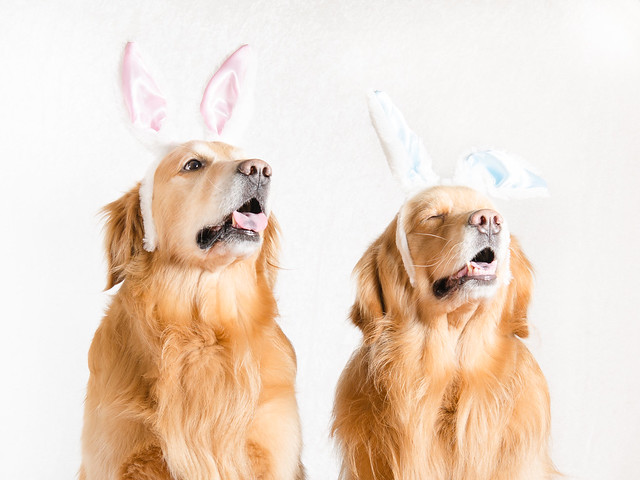 Golden Easter Bunnies