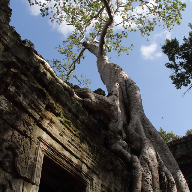 Ta Prohm, Angkor Archeological Park.
