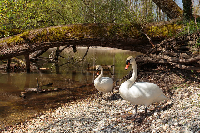 Spring Outing of Mr. and Mrs. Swan