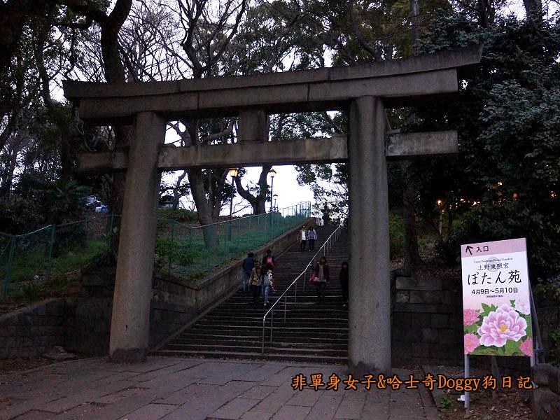 日本東京上野恩賜公園櫻花18