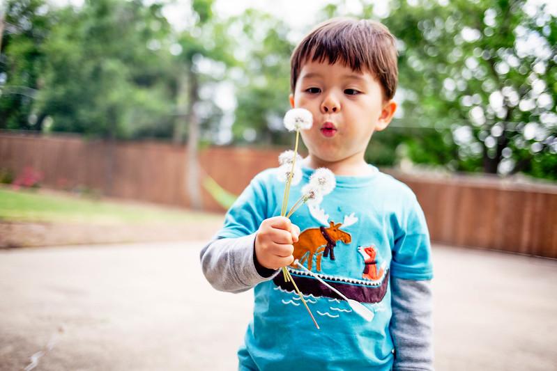 cute & little blog | dylan blowing dandelions