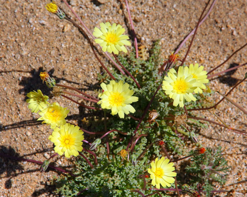 IMG_2692 Pacific Crest Trail