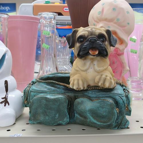 camera bag of pug