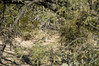 Roadrunner, Sabino Canyon, near Tucson, Arizona